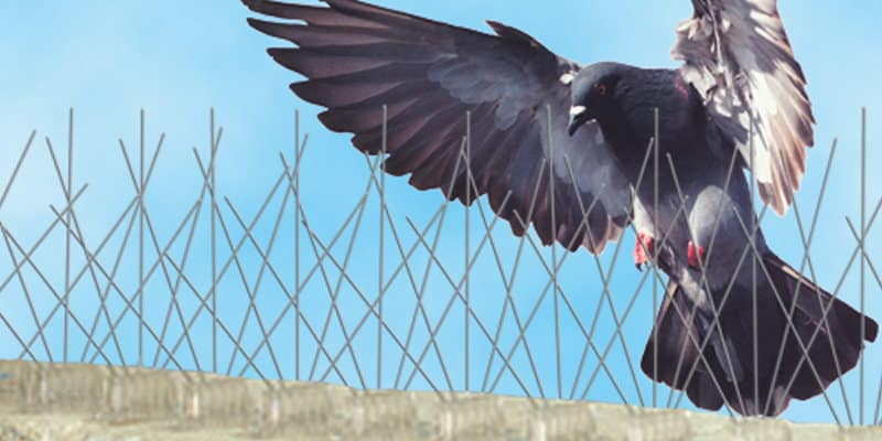 Bird Spike Systems Glasgow - Pest Solutions - Pest Bird Control
