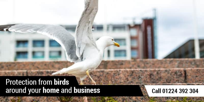 Gull Control Aberdeen
