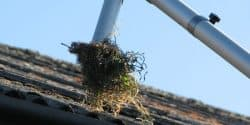 Gutter Cleaning Glasgow - Pest Solutions - Hygiene Services