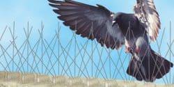 Pest Bird Deterrent Systems Glasgow - Pest Solutions - Bird Control