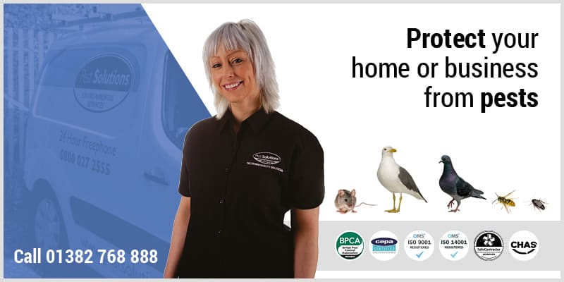 Pest Prevention Dundee