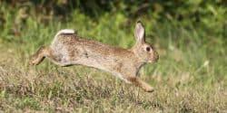 Rabbit Control Glasgow - Pest Solutions - Pest Prevention