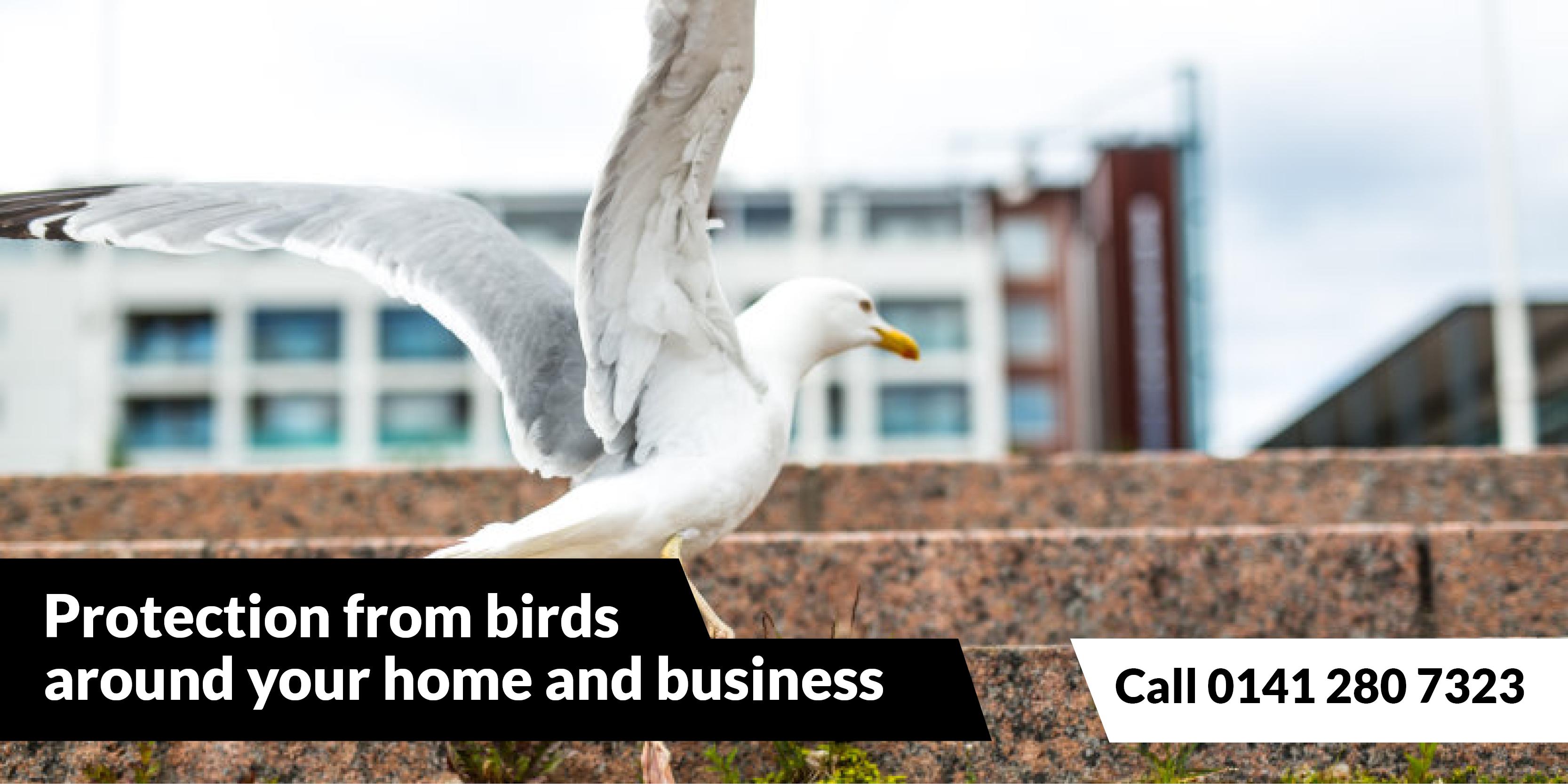 Rat Control Glasgow